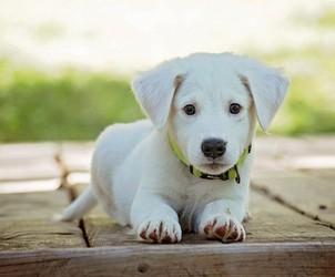 Acheter collier antiparasitaire pour chien