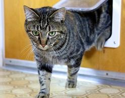 Comparatif chatière