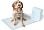Comparatif tapis éducateur pour chien