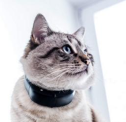 meilleur collier gps pour chat